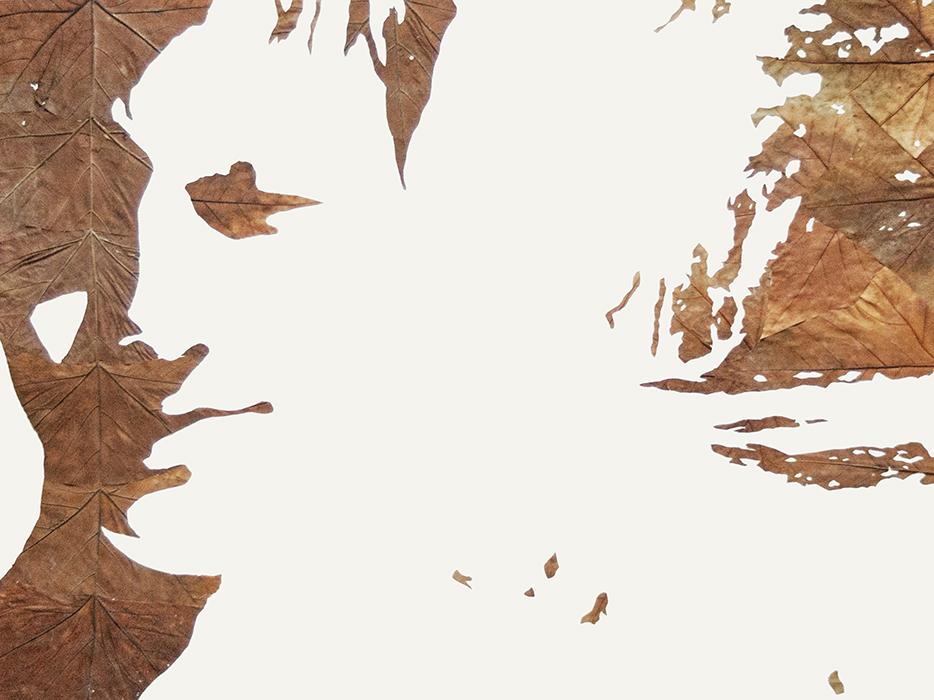 Lichtbild 2013-3 | Laub auf Papier | 2015 | 60 x 80 cm