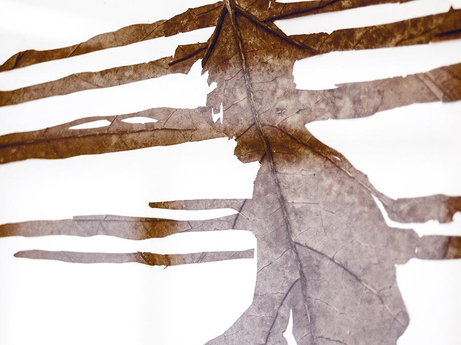 Nach der Flut | Laub auf Papier | 2015 | 86 x 122 cm (Ausschnitt)