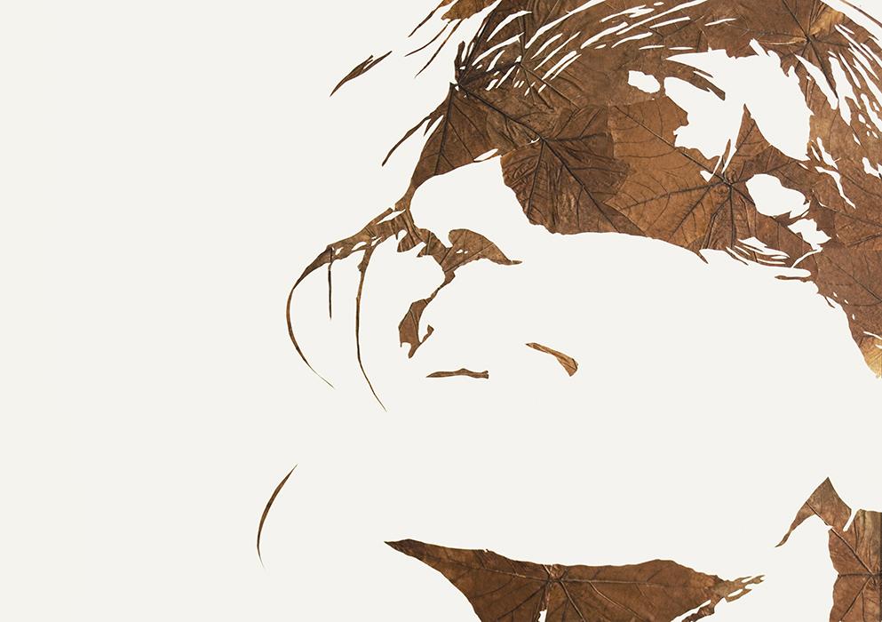 Lichtbild II | Laub auf Papier | 2015 | 86 x 122 cm