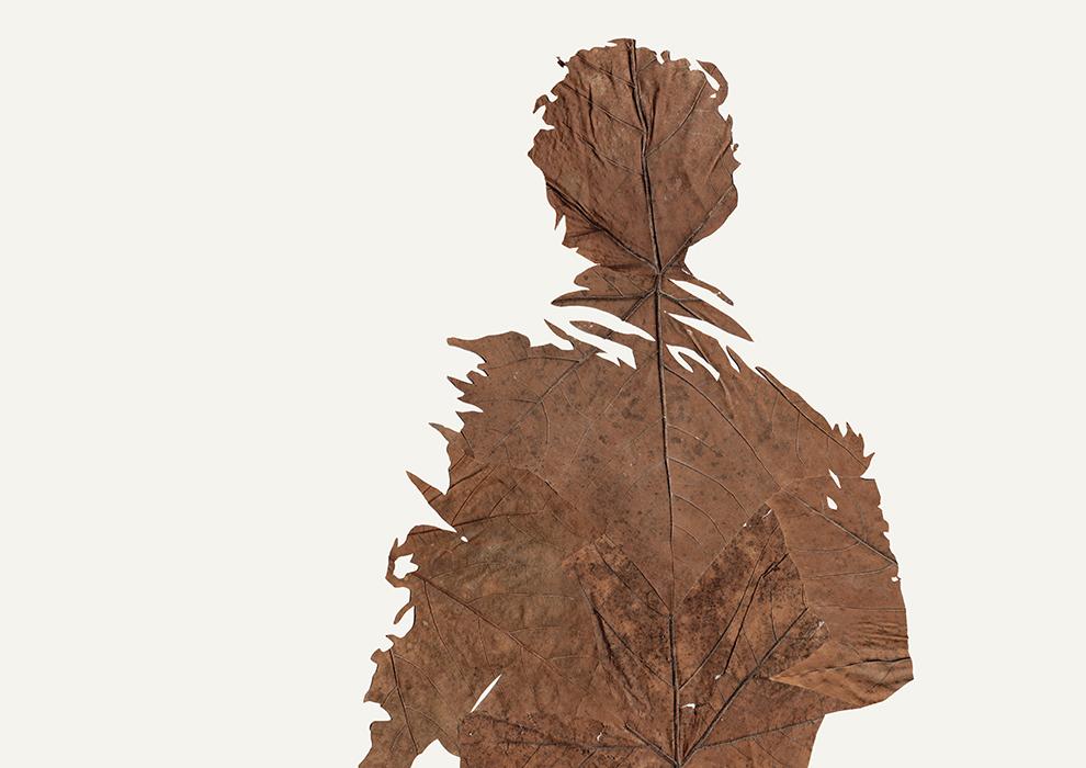Lichtspiel II | Laub auf Papier | 2015 | 42 x 59,2 cm