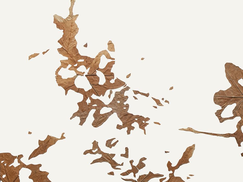 Lichtbild 2017-18 | 2018 | Laub auf Papier | 60x80 cm