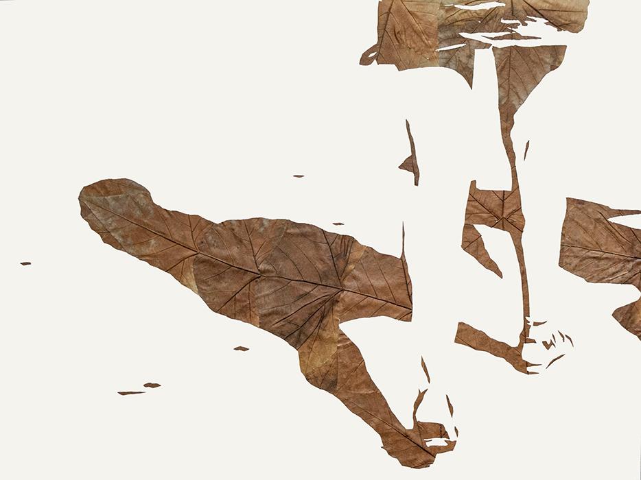 Lichtbild 2014-80 | 2019 | Laub auf Papier | 60x80 cm
